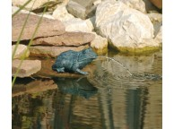 Petite Grenouille pour Bassin de Jardin - LeKingStore